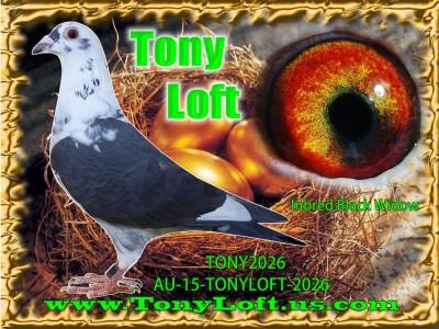 TonyLoft | tonyloft